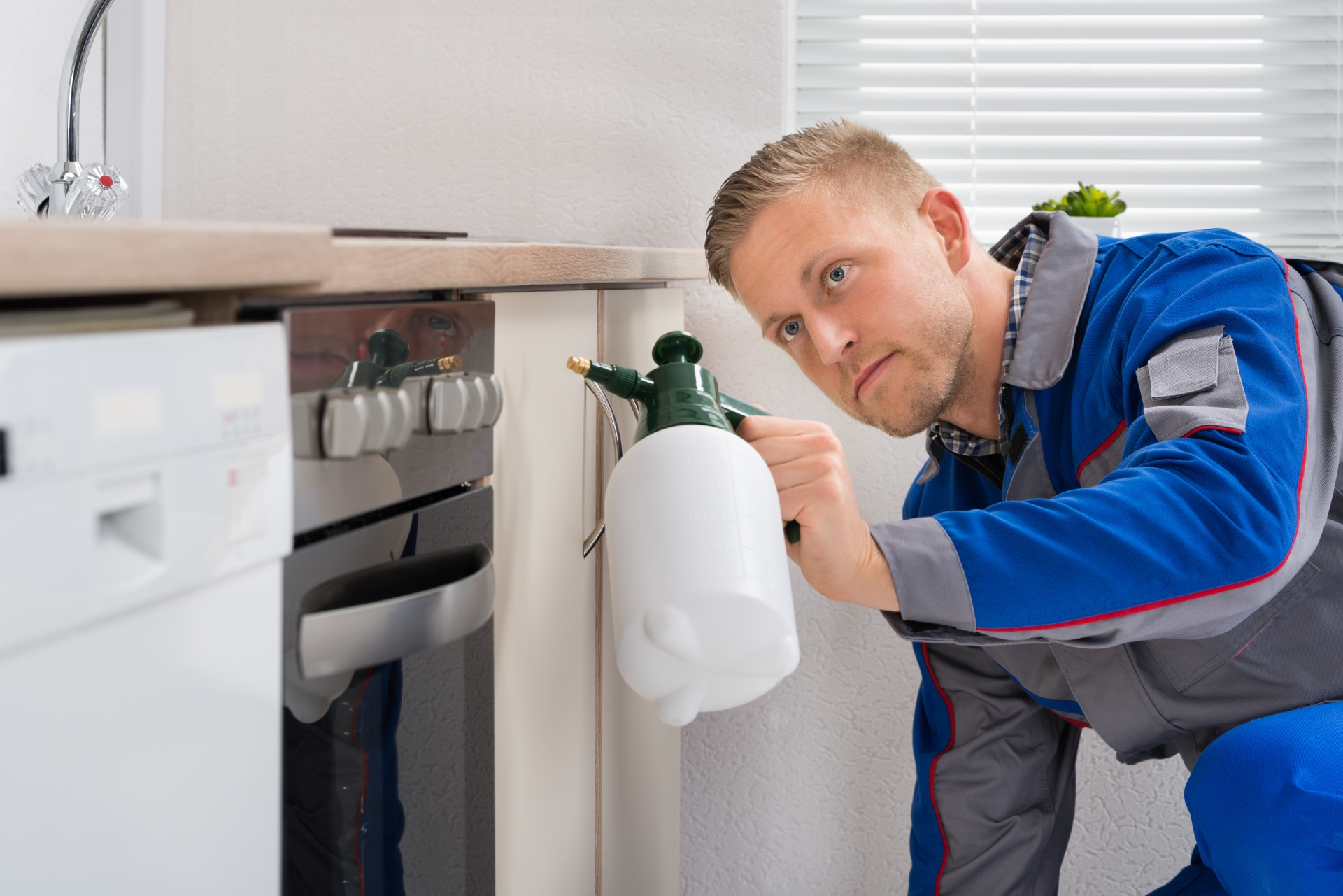 Pest Inspection, Pest Control in Plaistow, E13. Call Now 020 8166 9746